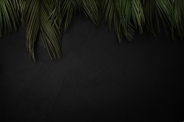 Bela composição de folhas de palmeira com copyspace Foto gratuita