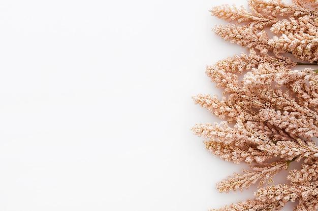 Bela composição feita com folhas de trigo em fundo branco Foto gratuita