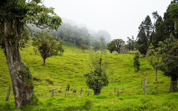 Bela costa riquenho rural com ricas colinas verdes Foto gratuita