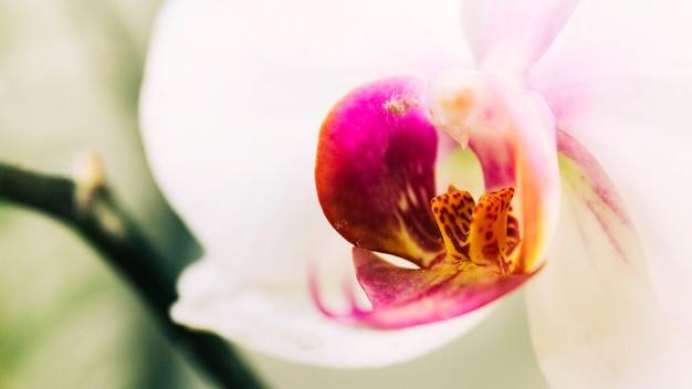 Bela flor da orquídea que floresce ao ar livre Foto gratuita