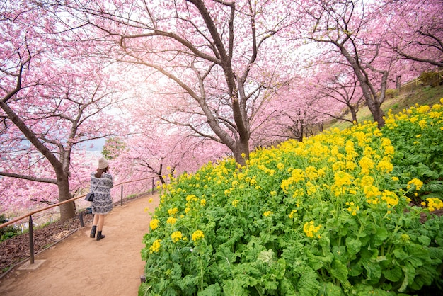 Bela flor de cerejeira em matsuda, japão Foto Premium