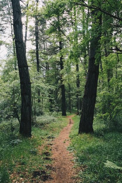 Bela floresta com tons de verde no país basco Foto Premium