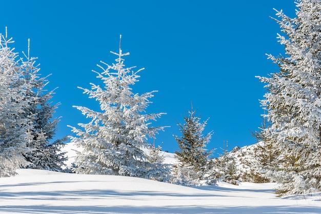 Bela floresta de inverno com árvores cobertas de neve em um dia ensolarado Foto Premium