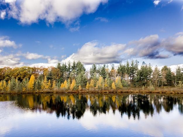 Bela foto da água refletindo as árvores na praia sob um céu azul nublado Foto gratuita