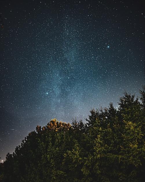Bela foto de baixo ângulo de uma floresta e o céu cheio de começos Foto gratuita