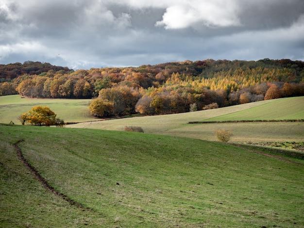 Bela foto de colinas gramadas com uma floresta à distância sob um céu nublado Foto gratuita
