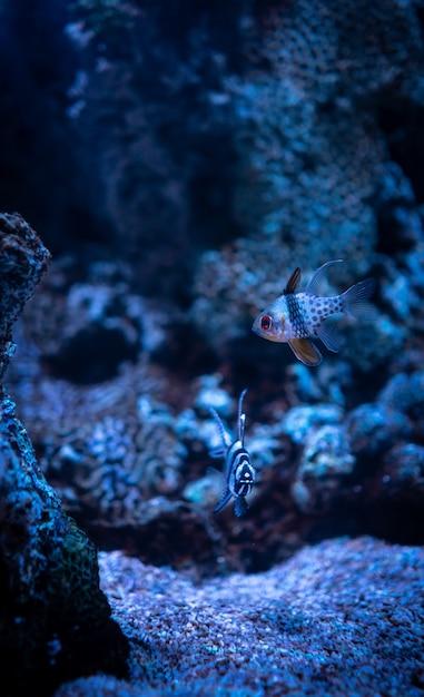 Bela foto de corais e pequenos peixes de recife de coral sob o oceano azul claro Foto gratuita