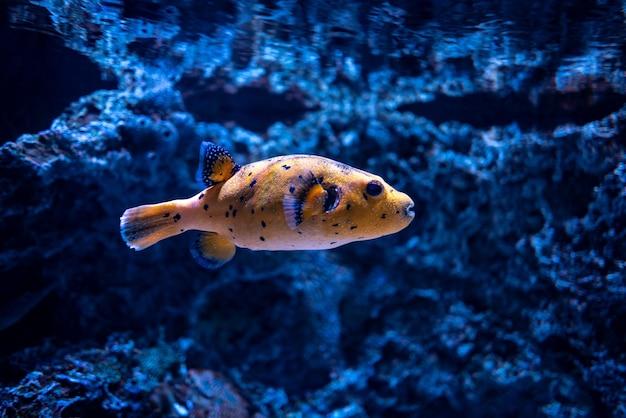Bela foto de corais e um peixe laranja sob o oceano azul claro Foto gratuita
