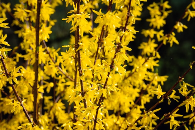 Bela foto de flores silvestres amarelas Foto gratuita