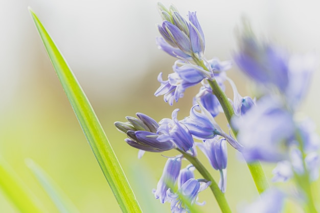 Bela foto de foco seletivo de uma flor roxa Foto gratuita