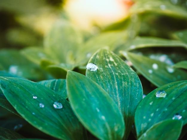 Bela foto de plantas verdes com gotas de água nas folhas do parque em um dia ensolarado Foto gratuita