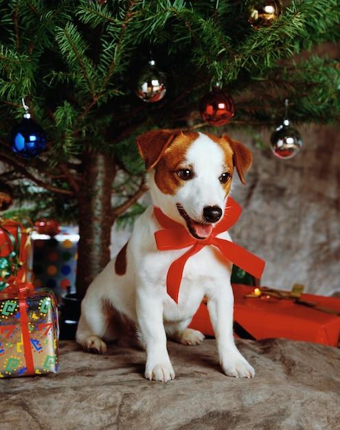 Bela foto de um cachorrinho fofo usando uma fita vermelha com presentes e uma árvore de natal Foto gratuita