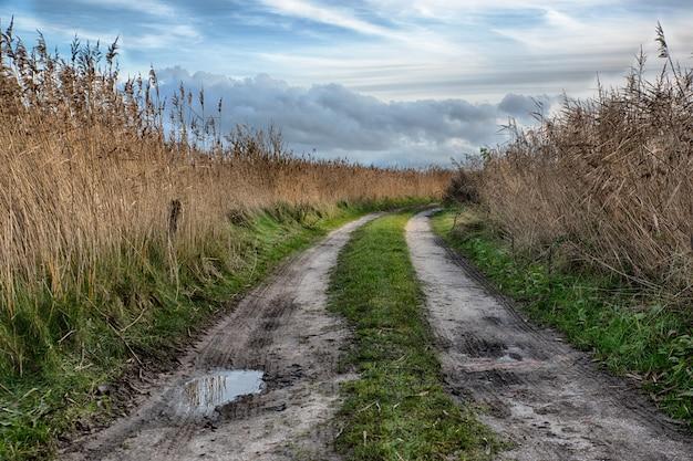 Bela foto de um caminho no meio de um campo na zona rural Foto gratuita