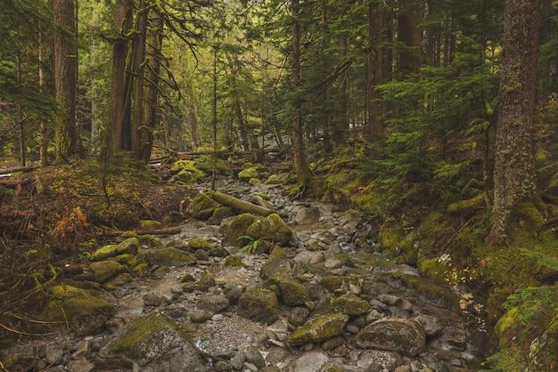 Bela foto de um caminho rochoso no meio de uma floresta com árvores de folhas verdes Foto gratuita