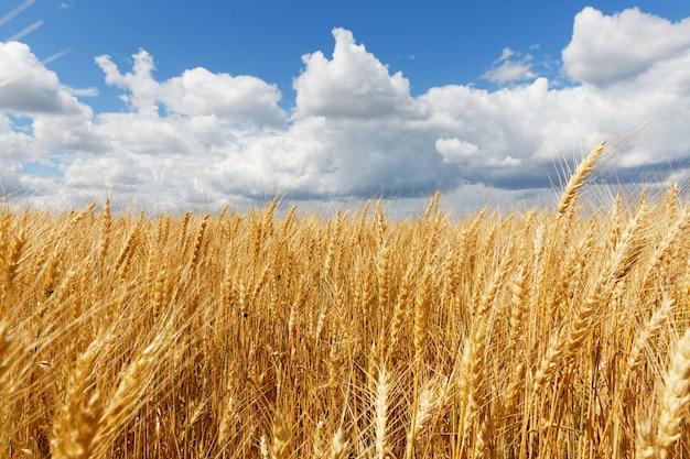 Bela foto de um campo branco com céu nublado Foto gratuita