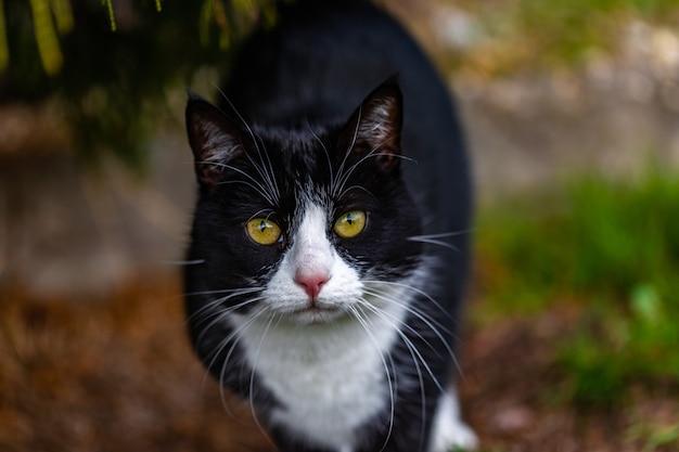 Bela foto de um gato preto fofo olhando para a câmera no jardim Foto gratuita