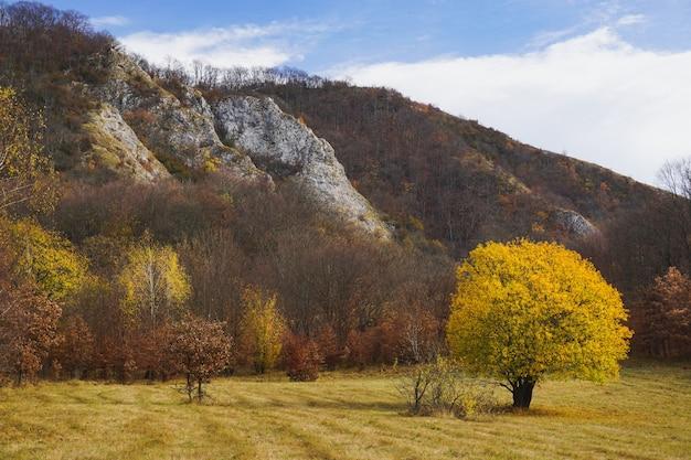 Bela foto de uma árvore solitária com folhas amarelas em um campo cercado por colinas Foto gratuita