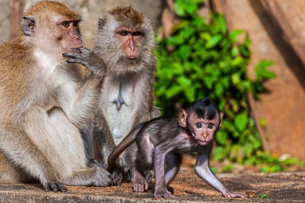Bela foto de uma família de macacos com mãe, pai e bebê macacos Foto gratuita