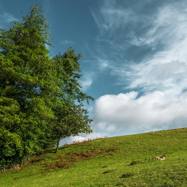 Bela foto de uma grande árvore em uma colina verde e o céu nublado Foto gratuita