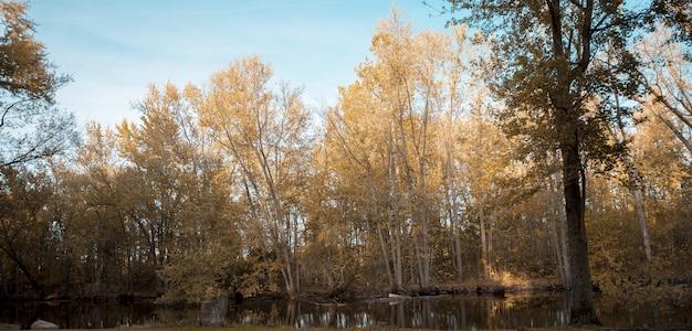 Bela foto de uma lagoa perto de altas árvores folhosas amarelas com um céu azul ao fundo Foto gratuita
