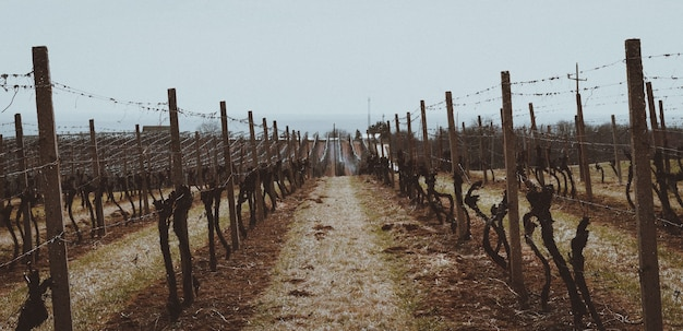Bela foto dos vinhedos protegidos por cercas de madeira e metal Foto gratuita
