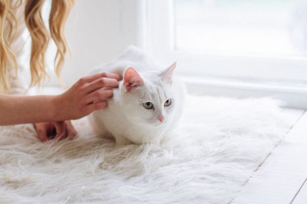 Bela loira sexy sentada na janela com gato Foto Premium
