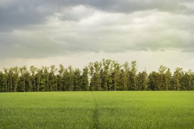 Bela luz da manhã no parque público com campo de grama verde e árvore Foto Premium