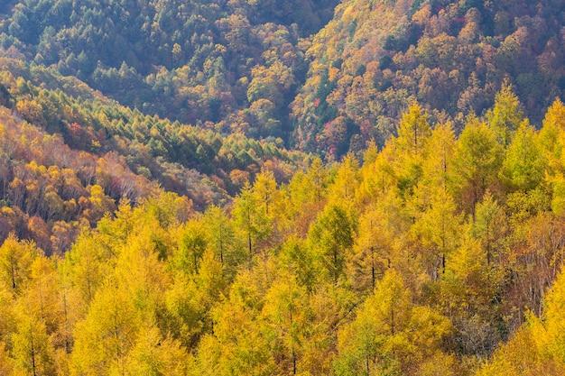 Bela montanha de outono na aldeia de takamura Foto Premium