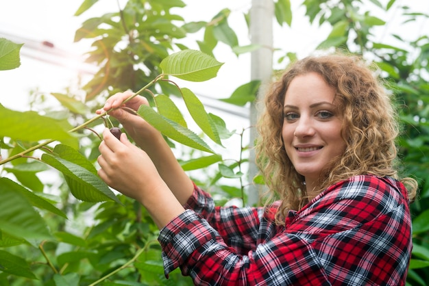 Bela mulher agricultora segurando frutas cereja em pomar verde Foto gratuita