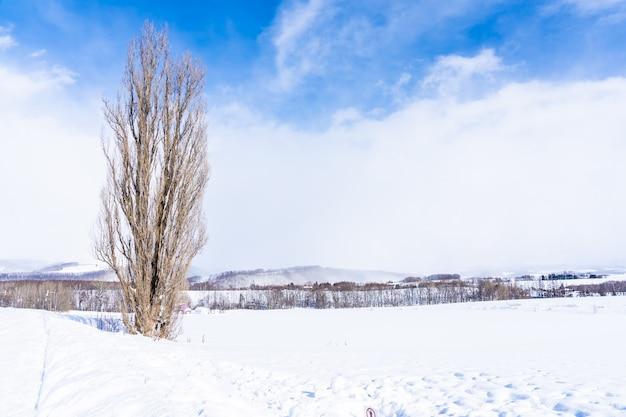 Bela natureza ao ar livre paisagem com árvore de ken e mary na área de biei Foto gratuita