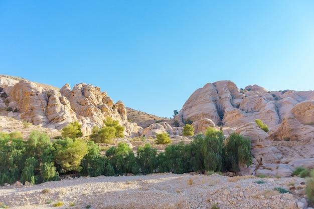 Bela paisagem com pedras de gengibre, plantas de primavera verde, árvore em petra, na jordânia Foto Premium