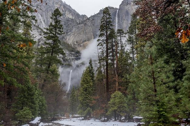 Bela paisagem com pinheiros altos no parque nacional de yosemite, califórnia, eua Foto gratuita