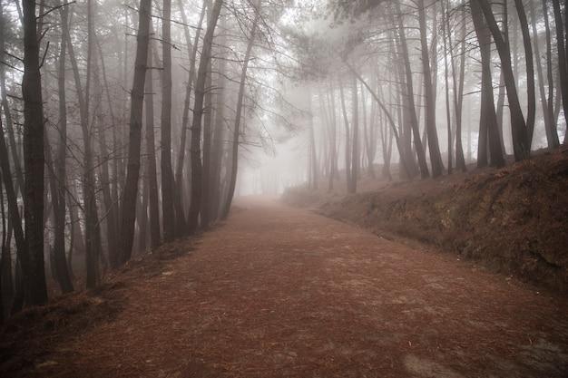 Bela paisagem da estrada com árvores altas Foto gratuita