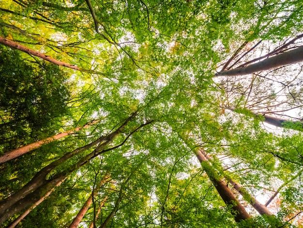 Bela paisagem da grande árvore na floresta com vista de baixo anjo Foto gratuita