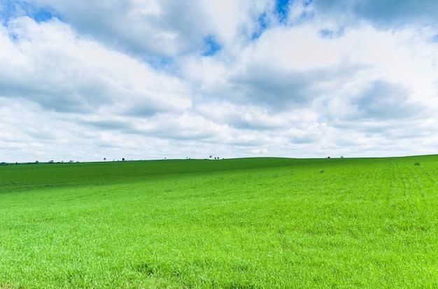 Bela paisagem de campo verde e céu nublado Foto Premium