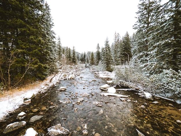 Bela paisagem de um rio cercado por pinheiros perto das montanhas tatra, na polônia Foto gratuita