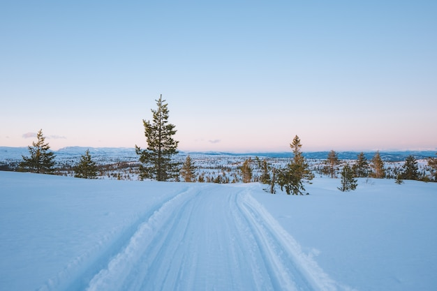 Bela paisagem de uma área nevada com muitas árvores verdes na noruega Foto gratuita