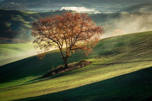 Bela paisagem de uma árvore seca em uma montanha verde coberta de névoa Foto gratuita