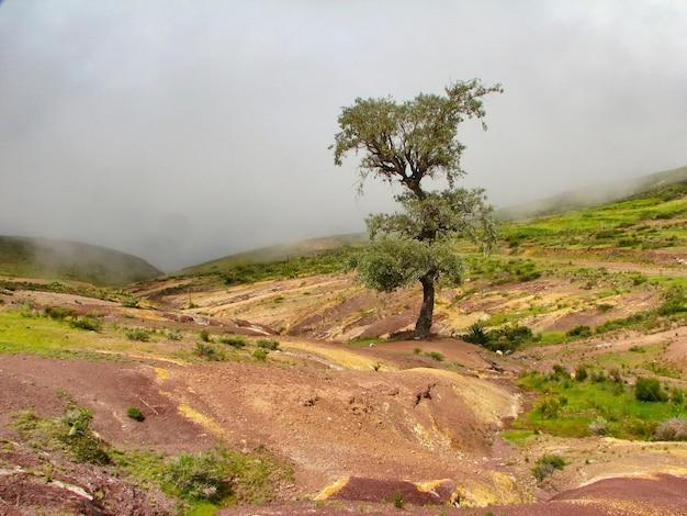 Bela paisagem de uma árvore solitária no meio de um campo vazio sob um céu nublado Foto gratuita