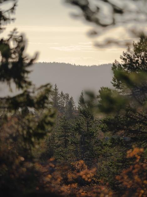 Bela paisagem de uma floresta com muitos abetos cercada por altas montanhas na noruega Foto gratuita