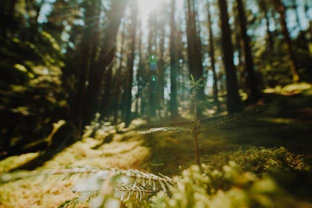 Bela paisagem de uma floresta verde Foto gratuita