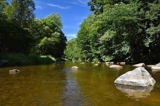 Bela paisagem de verão com rio, floresta, sol e céus azuis. fundo natural. Foto gratuita