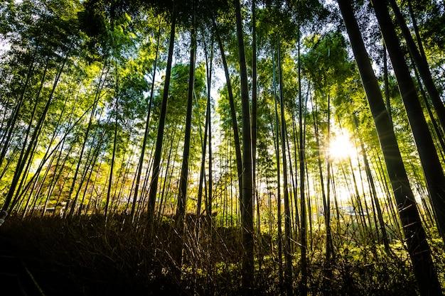 Bela paisagem do bosque de bambu na floresta em arashiyama kyoto Foto gratuita