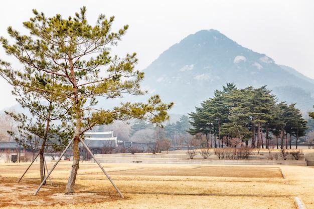 Bela paisagem em um parque de inverno na coréia do sul. Foto Premium