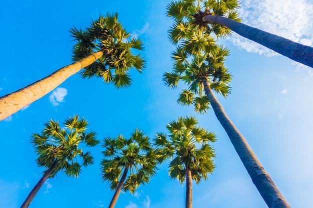Bela palmeira no céu azul Foto gratuita