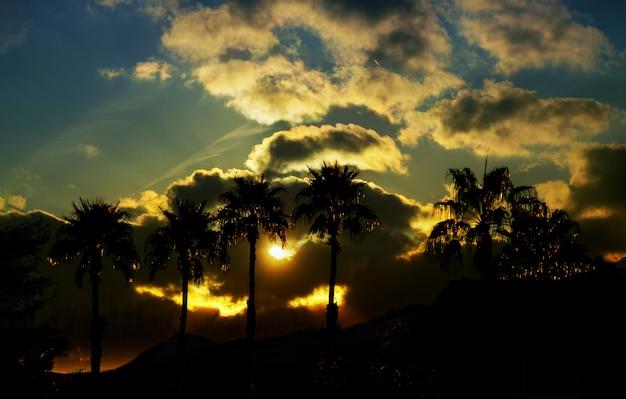 Bela vista com natureza e silhueta palmeira no céu ao pôr do sol Foto Premium