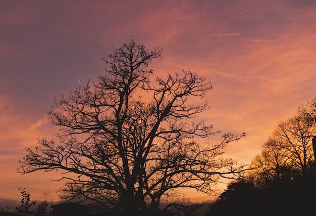 Bela vista de algumas grandes árvores com as nuvens no céu colorido Foto gratuita
