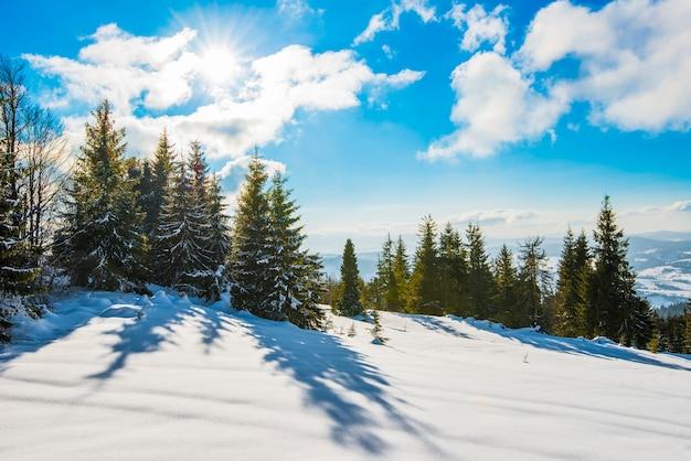 Bela vista de majestosos abetos verdes crescendo em uma colina no inverno Foto Premium