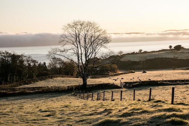 Bela vista de uma árvore isolada em um campo com um oceano calmo e montanhas ao fundo Foto gratuita