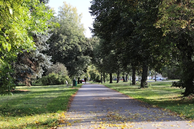 Bela vista de uma calçada cercada por árvores altas em campos cobertos de grama Foto gratuita